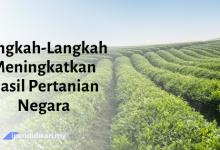 contoh karangan langkah langkah meningkatkan hasil pertanian negara
